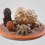Sin Tìtulo. 100 cm x 100 cm x 38 cm. Piezas de cerámica, ceniza volcánica teñida con oxidos de hierro y de manganeso y base de mdf.